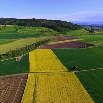 Agriculture, études agricoles